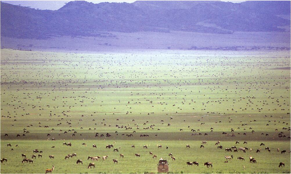 Tanzania - Lake Manyara, Ngorongoro and Serengeti